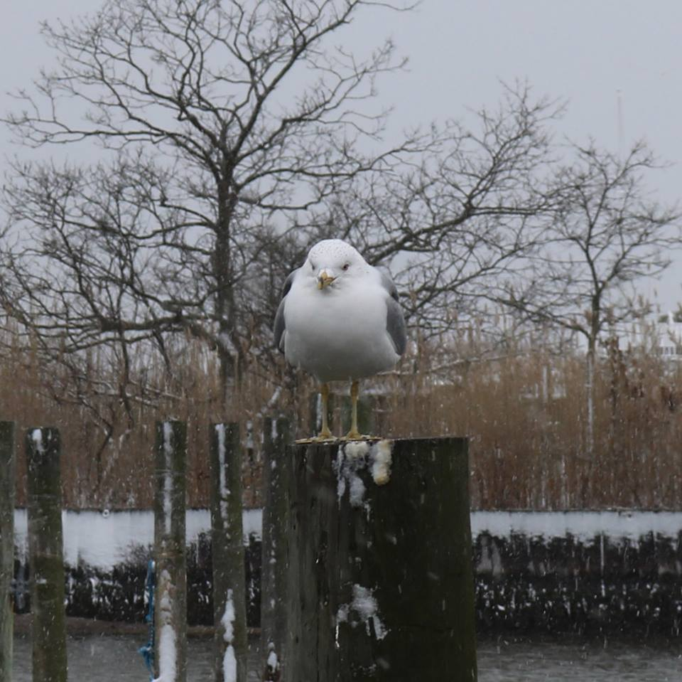 Seagull on Post